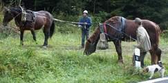 Koně v lese